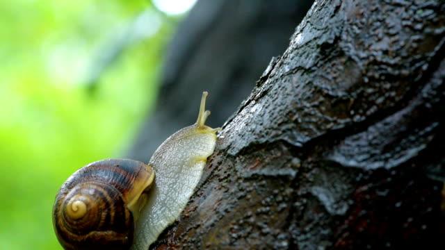Piacevole vita di snails