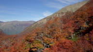 Lenga Beech Cerro Catedral, Argentina in fall