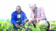 Lens flare as African Organic Farmers discuss crop