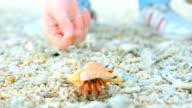 let big Hermit crab go