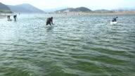 Life At Shimantogawa River, Kochi, Japan