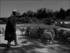'Life in Algiers' ALGERIA Algiers General views people on street women wearing burqas/headscarves SHOT along past herd of sheep Troops along on foot...