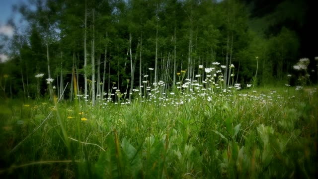 A light breeze blows wildflowers in a grassy meadow.