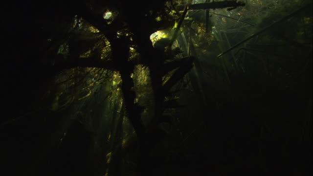 Light from the surface shines through dense seaweed and reeds on a riverbed. Available in HD.