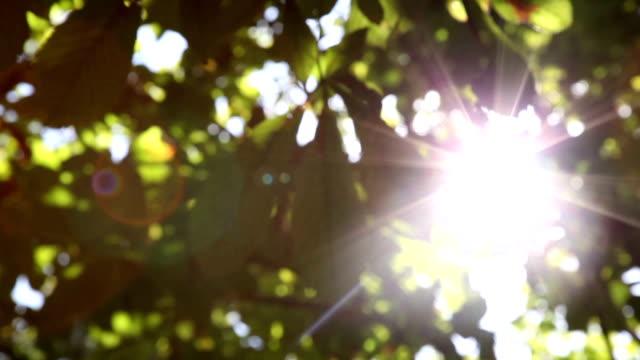 Light Leaks Through Tree Leaves