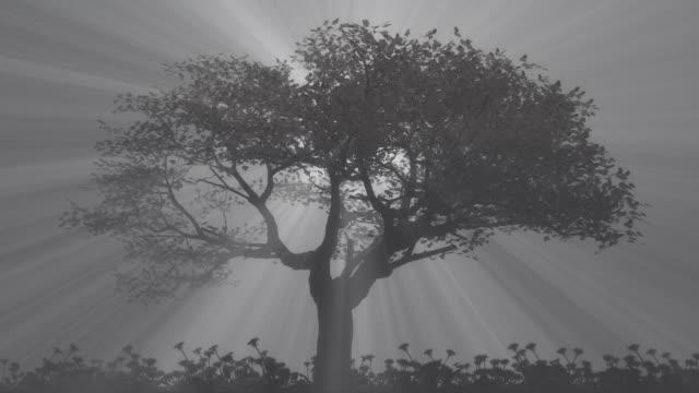 Light rays behind a single tree at night