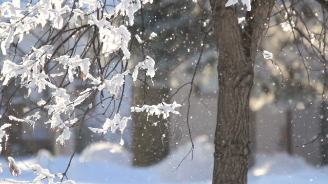 Inverno neve sfondo sfocato di luce