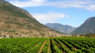 Lillooet British Columbia Canada Vineyard Winery