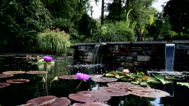 HD Lilly Pond with water fall