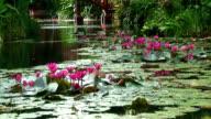 Lily pond background