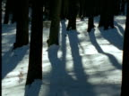 Line of Barbary macaques run through snowy forest