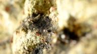 line way of termite