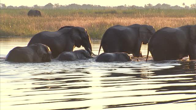 Linyanti Wildlife Reserve at Kings Pool Camp on June 14 2010 in Botswana