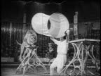 B/W 1955 lion jumping thru cloth tube being held by trainer in circus