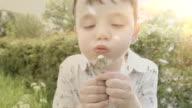 Little Boy Blowing The Seeds Off A Dandelion