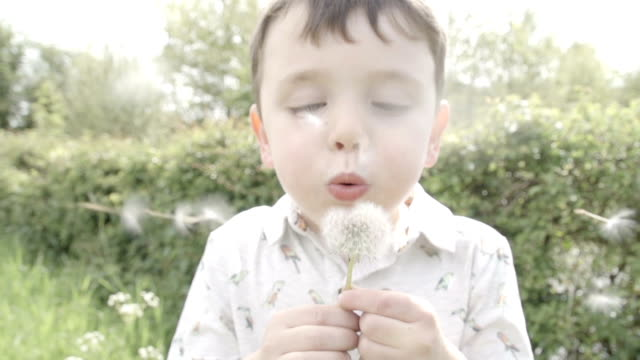 Little Boy Blowing The Seeds Off A Dandelion