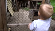 little boy got scared because of dog