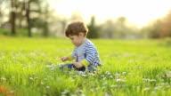 Kleine Junge auf daisy-Feld auf Sonnenuntergang