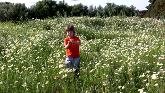 Little boy picking flowers