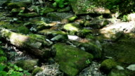 Little brook in woodland in spring