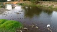 Little Egret Flying Over The River