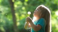 Little girl blows a dandelion