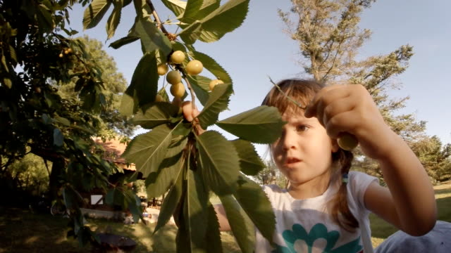 A Little Girl  Picked a Cherries. POV, Lens Flair, Dreamy Look, Slow Motion.