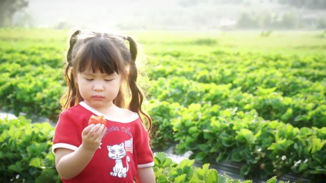 Little girl picks and eats strawberry
