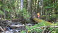 Kleines Mädchen geht auf log-Brücke im Wald