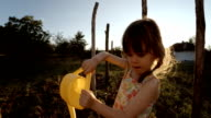 Little Girl Watering Organic Tomatoes,Sunset,Rural Scene.