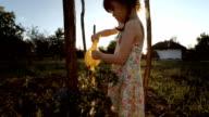 Little Girl Watering Organic Tomatoes,Sunset,Rural Scene.