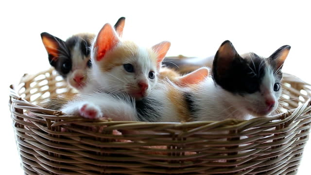 little kittens