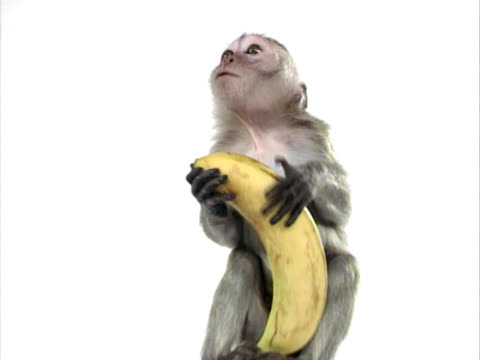 Little Monkey with Banana