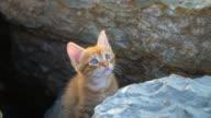 Little Shy Yellow Kitten