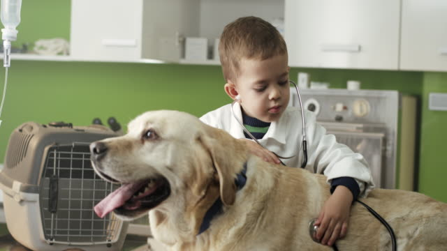 Little veterinarian and dog