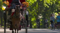 Lively horse and carriage trots in Central Park