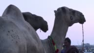 Livestock sellers gather in Pakistan ahead of Eid al Adha or the Festival of Sacrifice which is celebrated by Muslims around the world