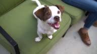 Leben mit Haustieren - Ausbildung des Hundes