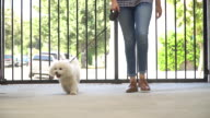 Living with Pets - Walking the Dog