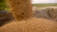 SLO MO Loading Wheat Into Trailer