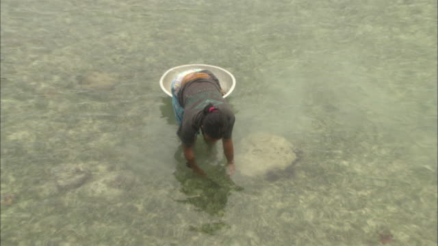 Local woman looking for shell fish, Borneo, Malaysia, Southeast Asia