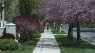 WS, Lockdown, boy riding his bike down a treelined sidewalk