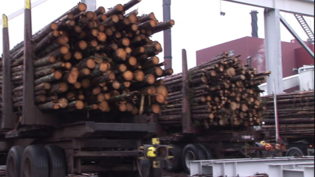 Log trucks line up at a paper mill.