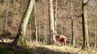 HD: Logger Schneiden einen Baum
