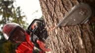 SLO-MO-Logger macht einen Schnitt mit einer Kettensäge