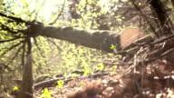 HD: Logger Schieben an einem Baum