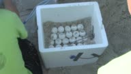 Loggerhead sea turtle eggs are removed so they can relocated to Atlantic coast due to BP oil spill / sign warning not to disturb sea turtle nests /...