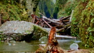 Logjam Columbia River Gorge Oregon Rain in Oneata Gorge 38