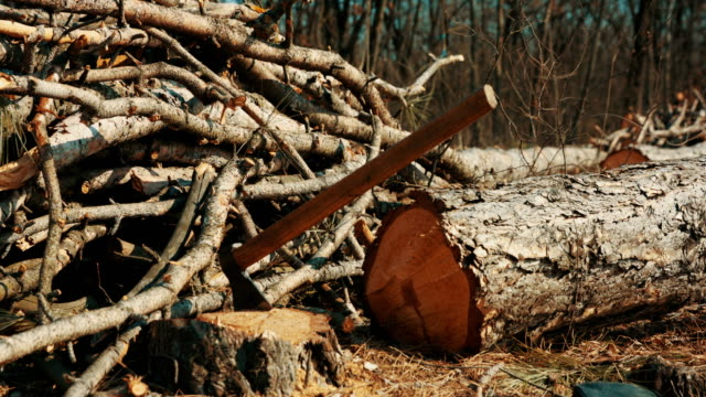 Logs at saw mill. Axe in the stump