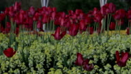 Londen bloemen planten